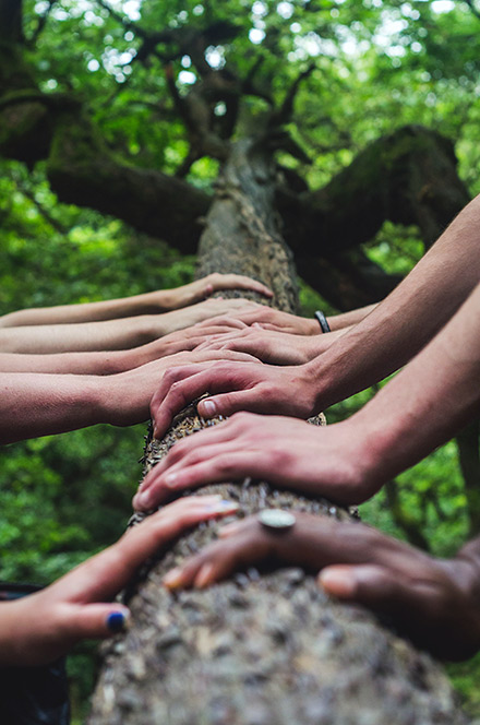 Many Hands on a tree